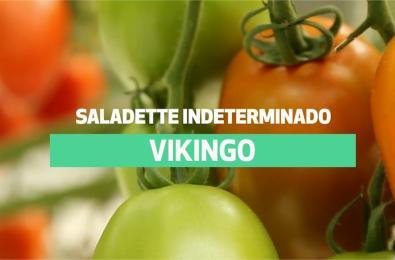 Vikingo_F1